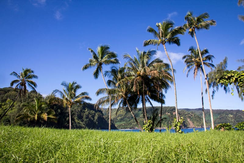 What are the Best Airbnb Maui rentals?