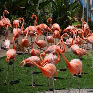 Airbnb San Diego Balboa Park