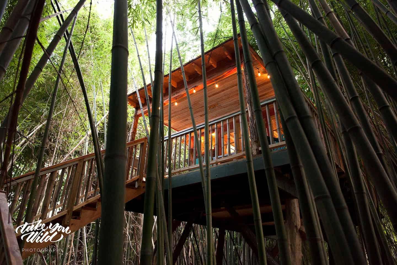 Image of treehouse rental in Georgia