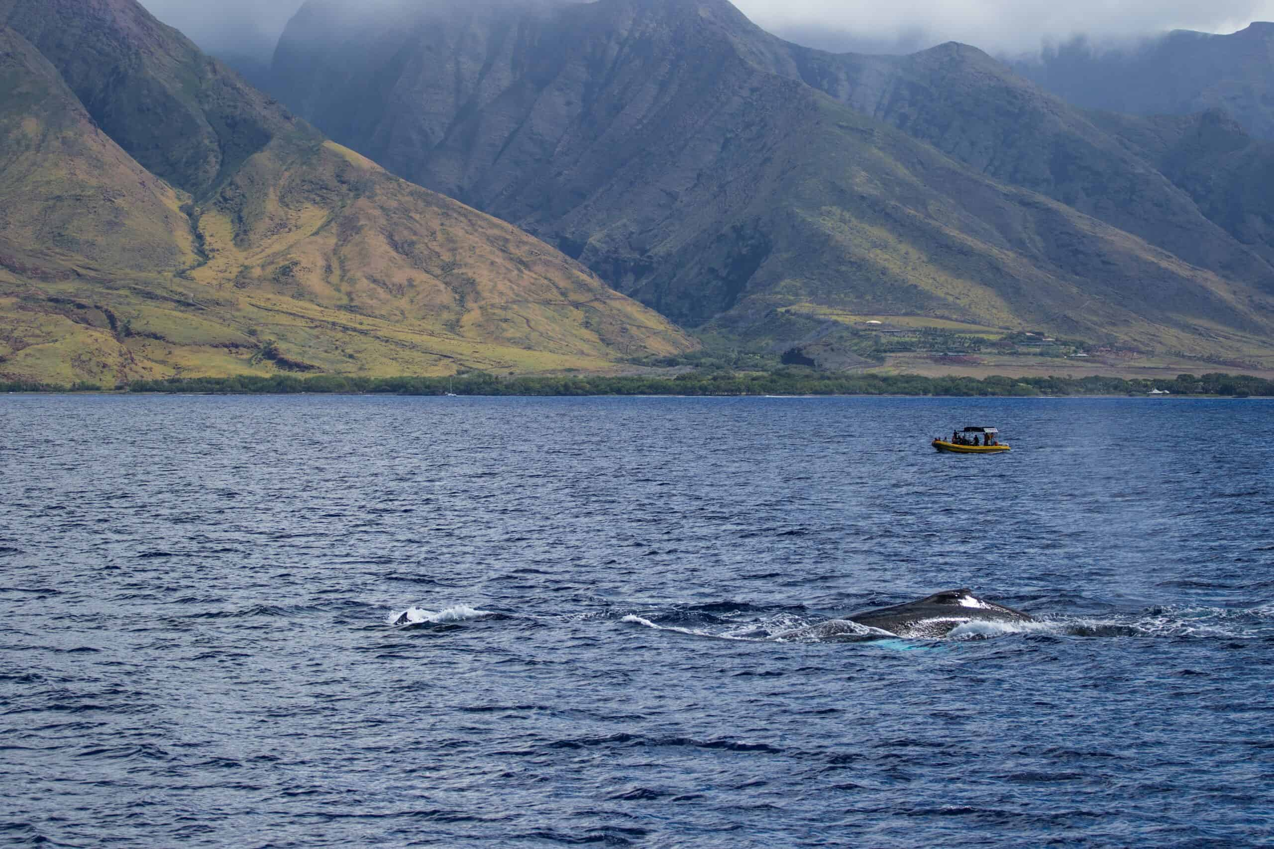 Wow! We found the Best Airbnb Lahaina, Hawaii Rentals. Save time searching!