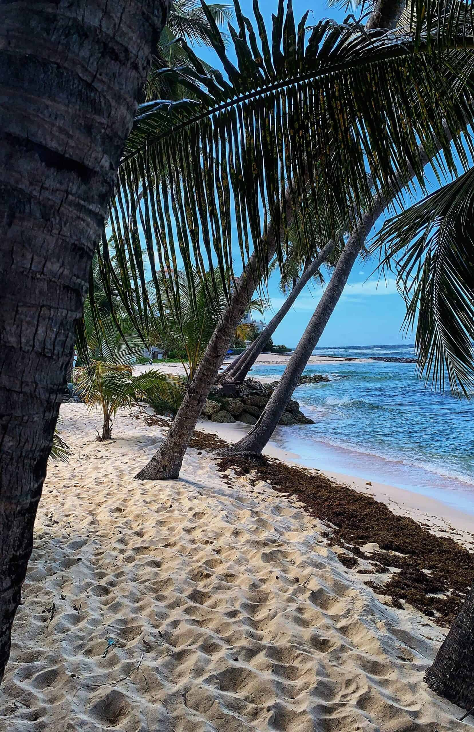 Wow! We found the Best Airbnb Barbados Rentals. Save time searching!