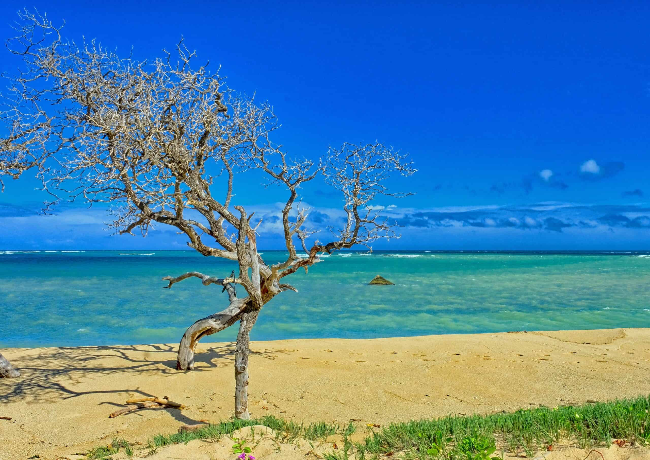 Wow! We found the Best Airbnb Kahului, Hawaii Rentals. Save time searching!
