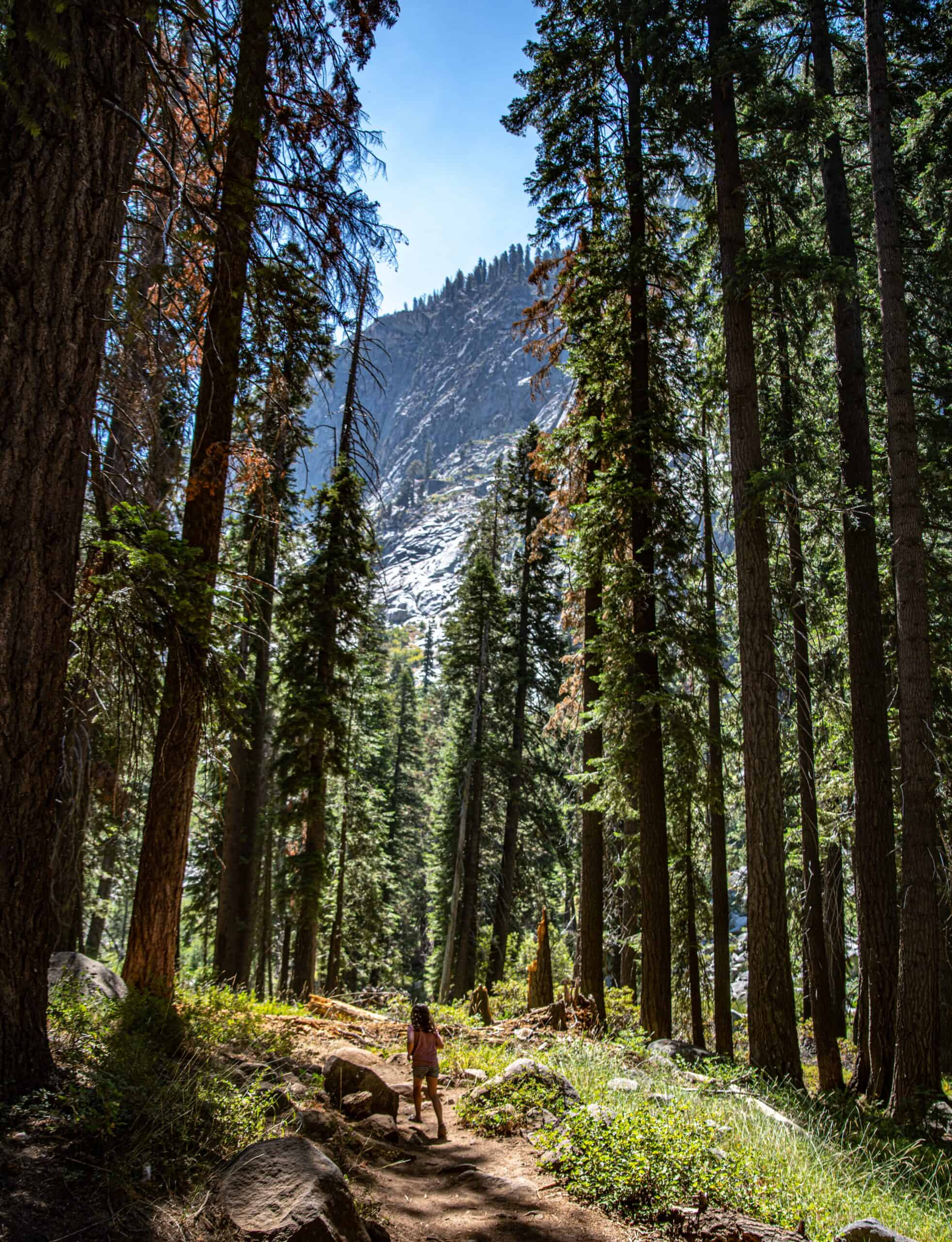 Wow! We found the Best Airbnb Sequoia, California Rentals. Save time searching!