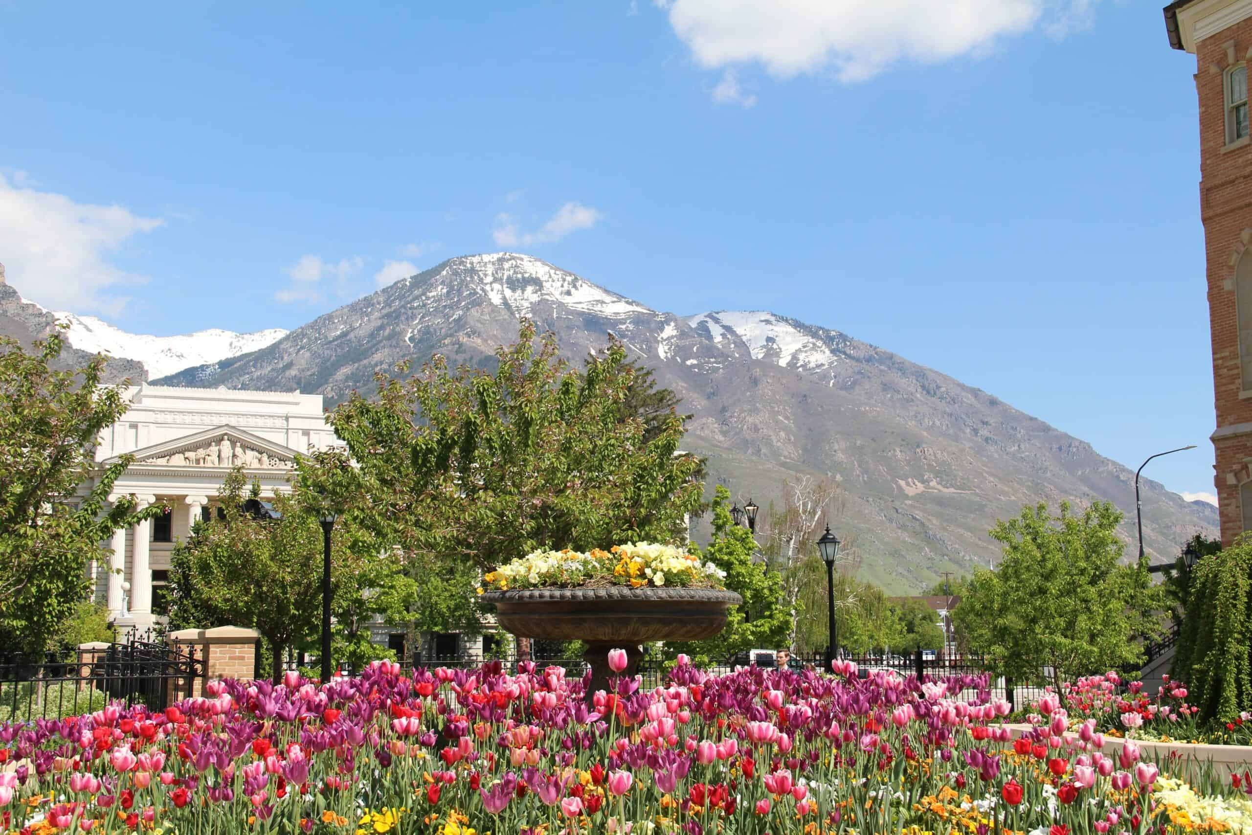 Wow! We found the Best Airbnb Provo, Utah Rentals. Save time searching!