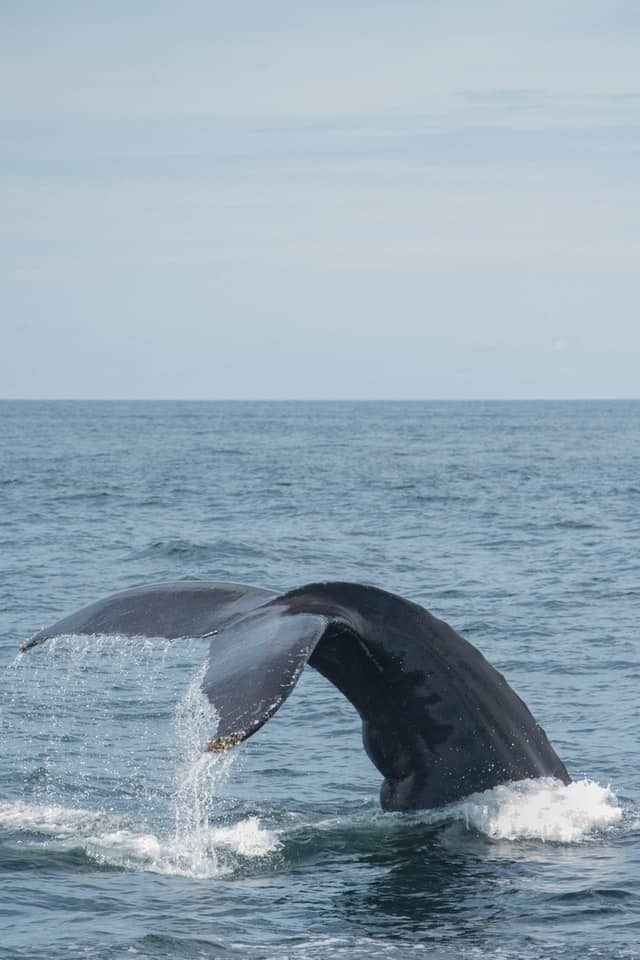 Beachfront rentals in Massachusetts for whale watching